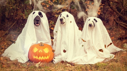 These Halloween Zoom backgrounds will spice up any virtual celebration.