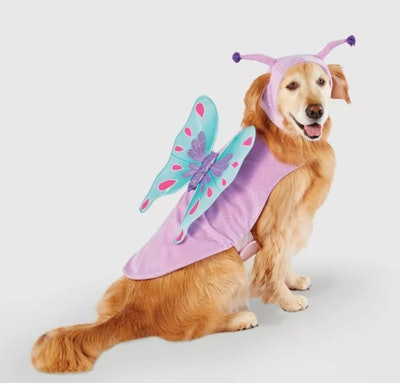 Butterfly Halloween Dog and Cat Costume