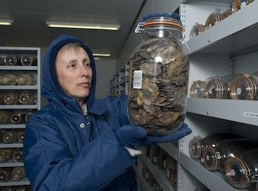 Millennium Seed Project vault.
