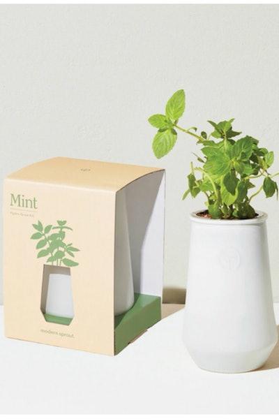 Modern Sprout Mint Indoor Garden Kit