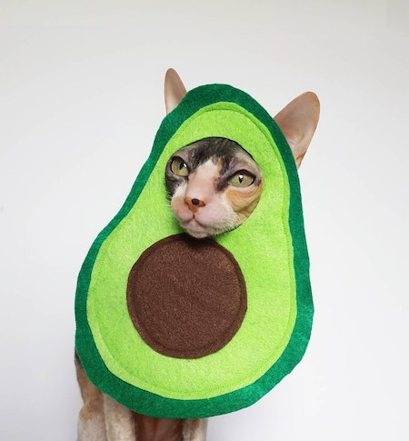 Avocato cat and small pet costume in soft green lightweight felt