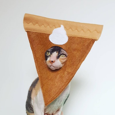 Pumpkin pie cat and small pet hat felt costume