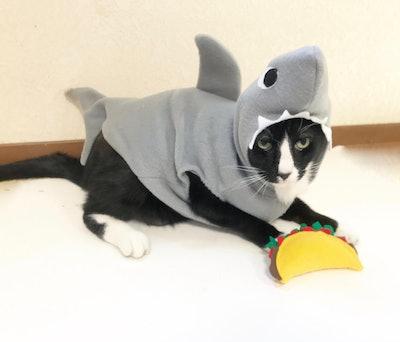 Shark Costume Cat or Dog