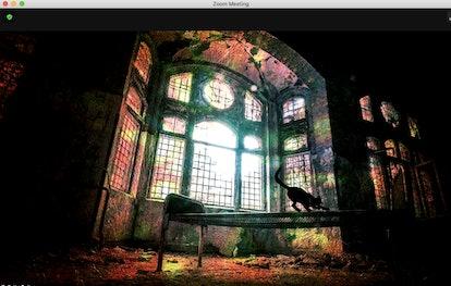 Haunted house zoom background: black cat