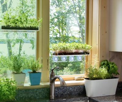 Window Garden Planters (Set of 2)