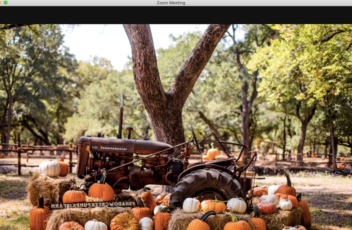 These pumpkin Zoom backgrounds will make your calls fall AF.