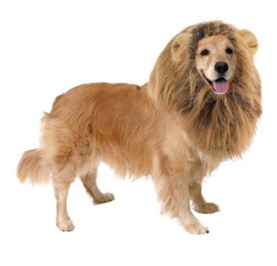 Lions Mane Dog Costume