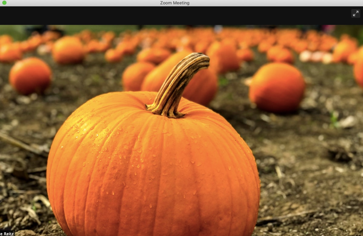 These pumpkin Zoom backgrounds will make your call fall AF.