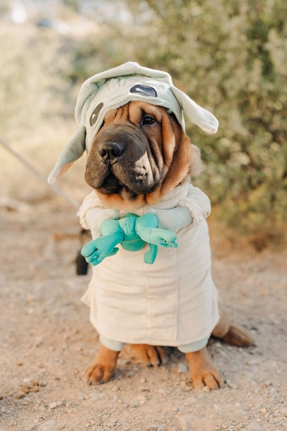 The Mandalorian The Child Dog Halloween Costume