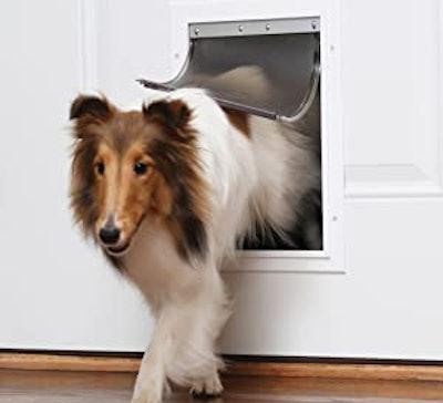 PetSafe Extreme Weather Dog and Cat Door, Large