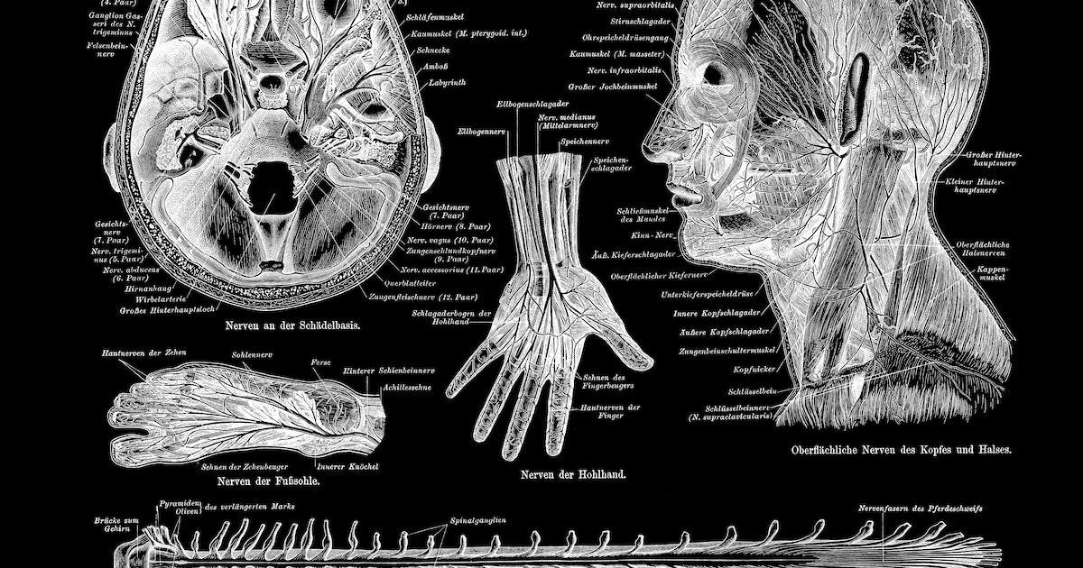 Anatomy  cover image