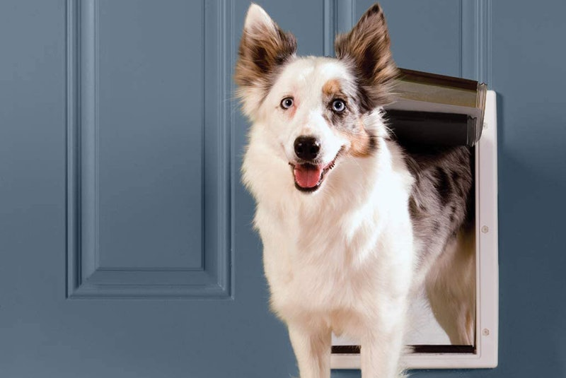 Best Insulated Dog Doors