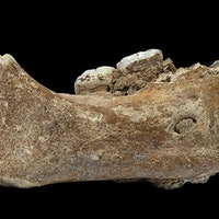 Studies reveal how an ancient people profoundly influence human history