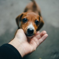 The psychology behind a dog's happiness comes down to one key factor