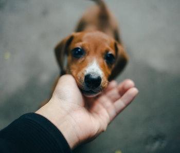 Closeup of a dog.