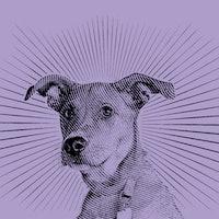 "Pets and coronavirus: Animal-human bonds have a ""buffering"" effect"