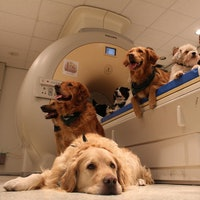 Dogs don't care about one part of the body as much as we thought