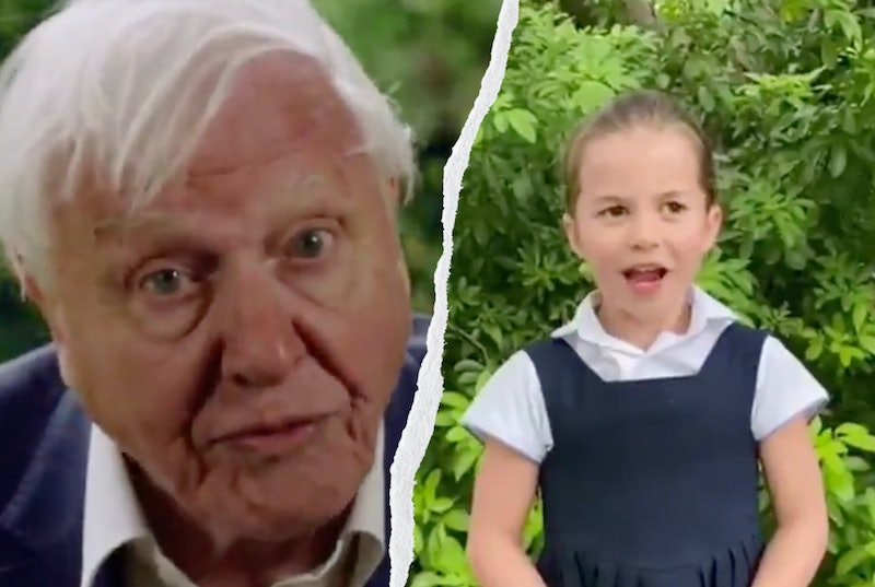 David Attenborough pictures in a blue jumper and white shirt in a side by side with a picture of princess charlotte wearing a navy blue pinafore dress and short sleeved white shirt