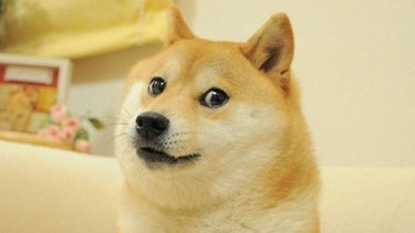 """A photo of the """"doge"""" dog."""