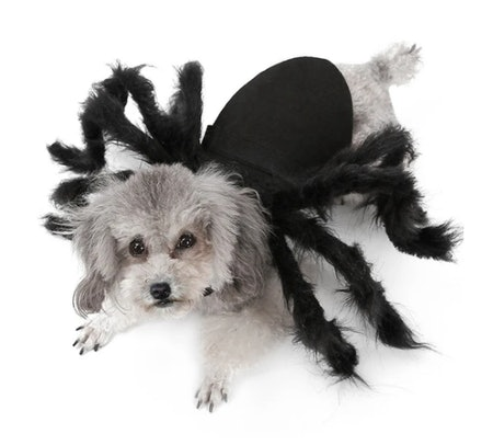 Spider Pet Costume For Dogs