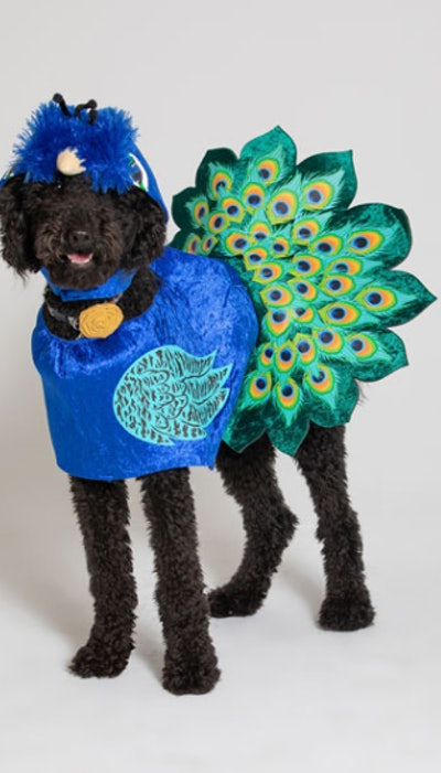 Pretty As A Peacock Dog Costume