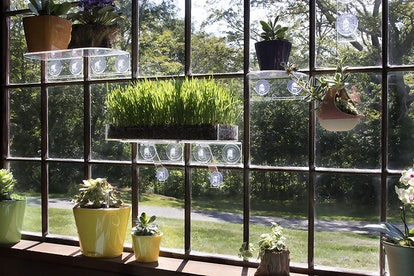 Window Garden Acrylic Window Shelf