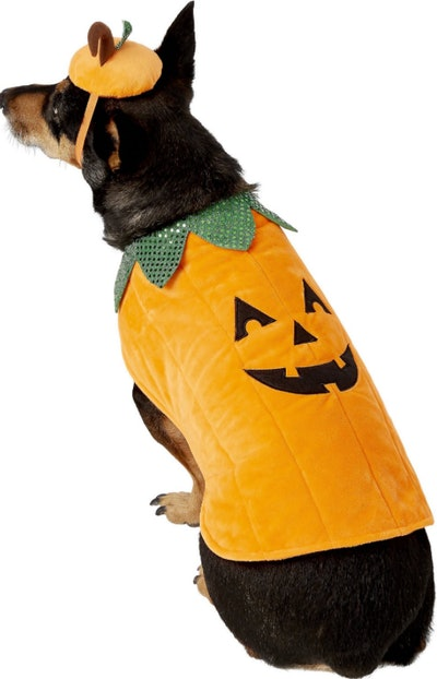 Frisco Pumpkin Dog & Cat Costume