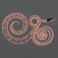 6 deadly snake myths, debunked
