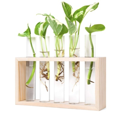 Mkono Wall Hanging Glass Planter Propagation Station