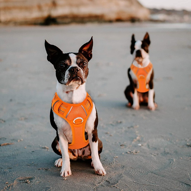 best dog harnesses for small dogs