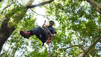 A professional tree climber building the artificial canopy in 2015.