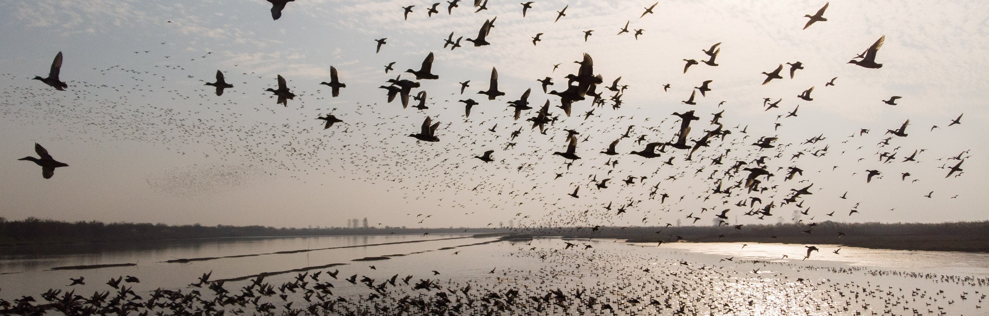 a flock of migratory birds fly over the West Dongting Lake in Changde, central China's Hunan Province.