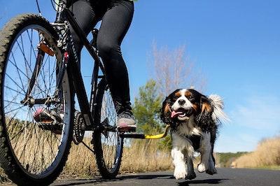 1-Running Dog Bike Tow Leash