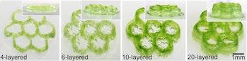 algae hydrogel liver organ