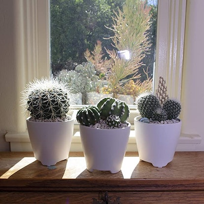 Altman Plants Assorted Live Cactus Collection (4-Pack)