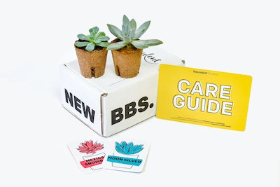 Succulent Gift Box: 6-Month Subscription