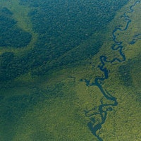 Scientists made a counterintuitive discovery about the Amazon rainforest