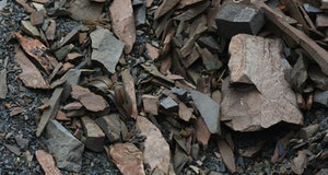 Chinese herb camouflaged against rocks