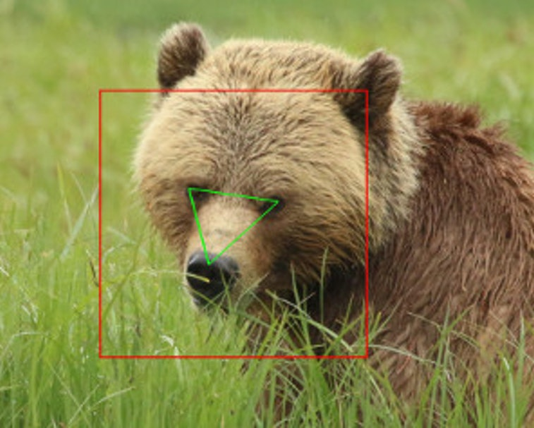 A grizzly bear sits in the grass looking toward the camera. A box and triangle are overlaid on their face.
