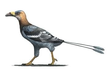 fossil bird reconstruction