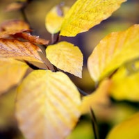 Study reveals a counterintuitive way climate change is affecting fall