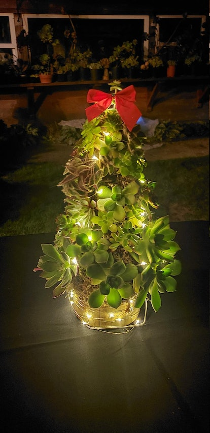 Succulent Christmas Holiday Tree