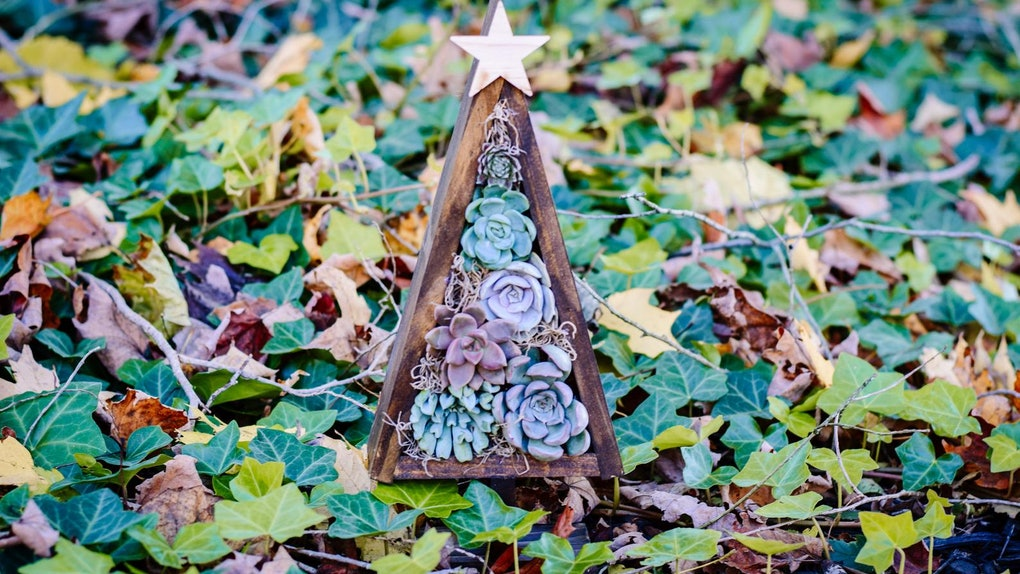 A wooden planter with succulents inside that looks like a Christmas tree, sits in the woods on the ground.