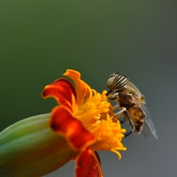 A new study reveals surprising similarities between bees and humans