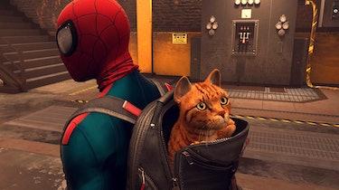spider-man miles morales cat