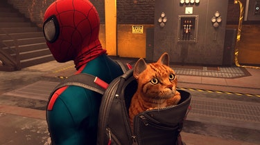 spider-man miles morales cat