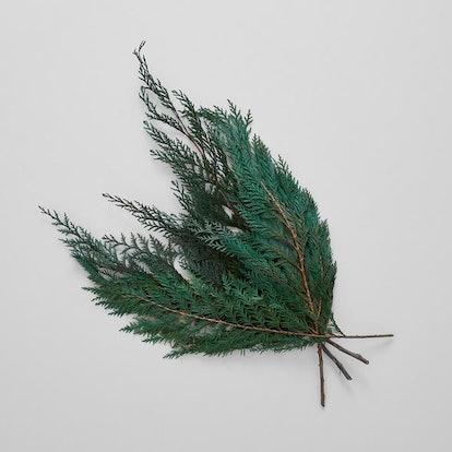 Preserved Cedar