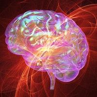 How music rewards the brain