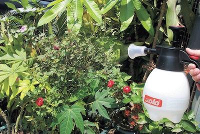 Solo 418 2-Liter One-Hand Pressure Sprayer