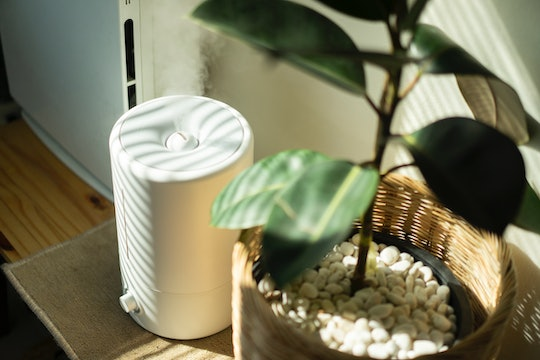 easy-to-clean humidifier next to a plant